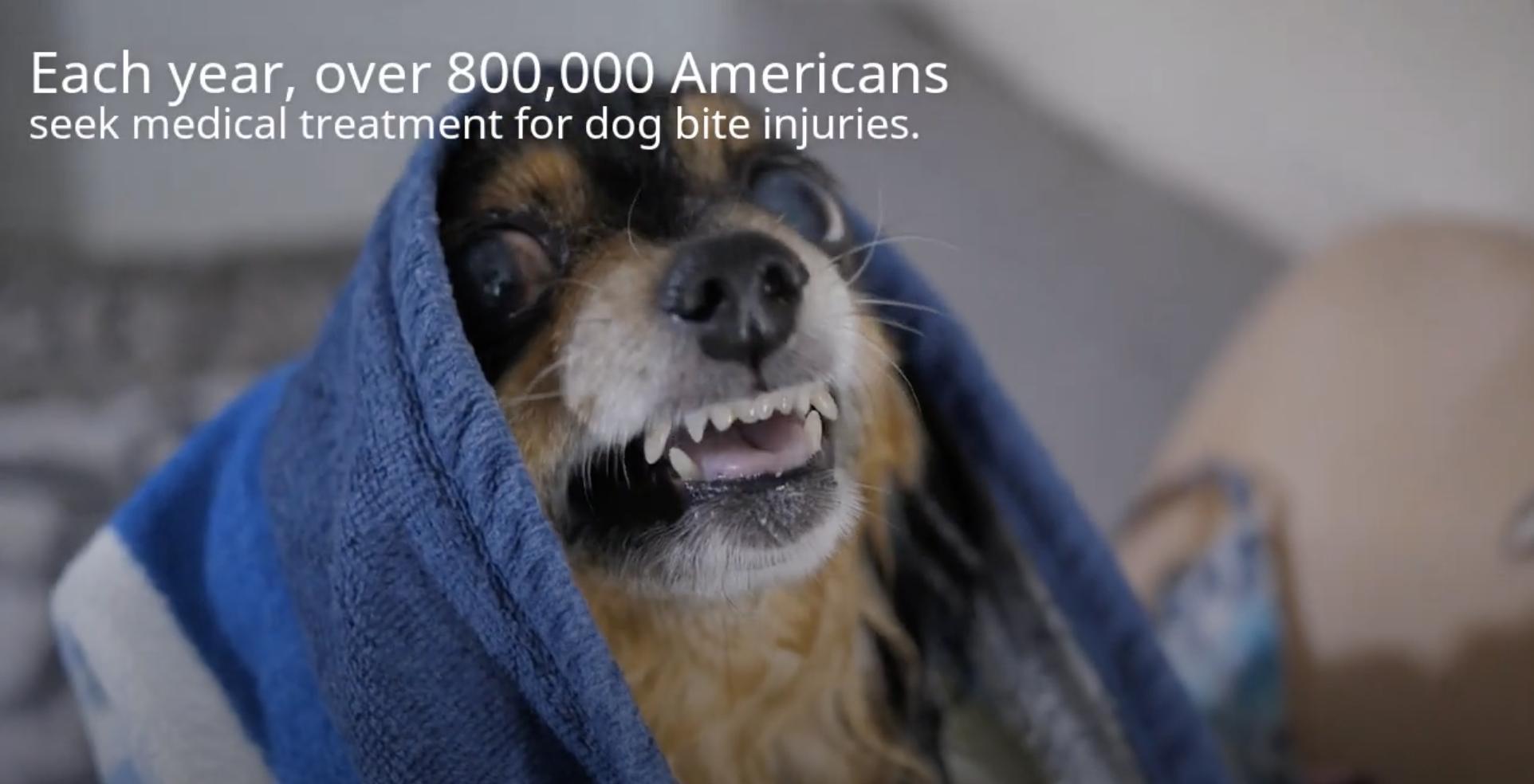 dog bite injury video thumbnail